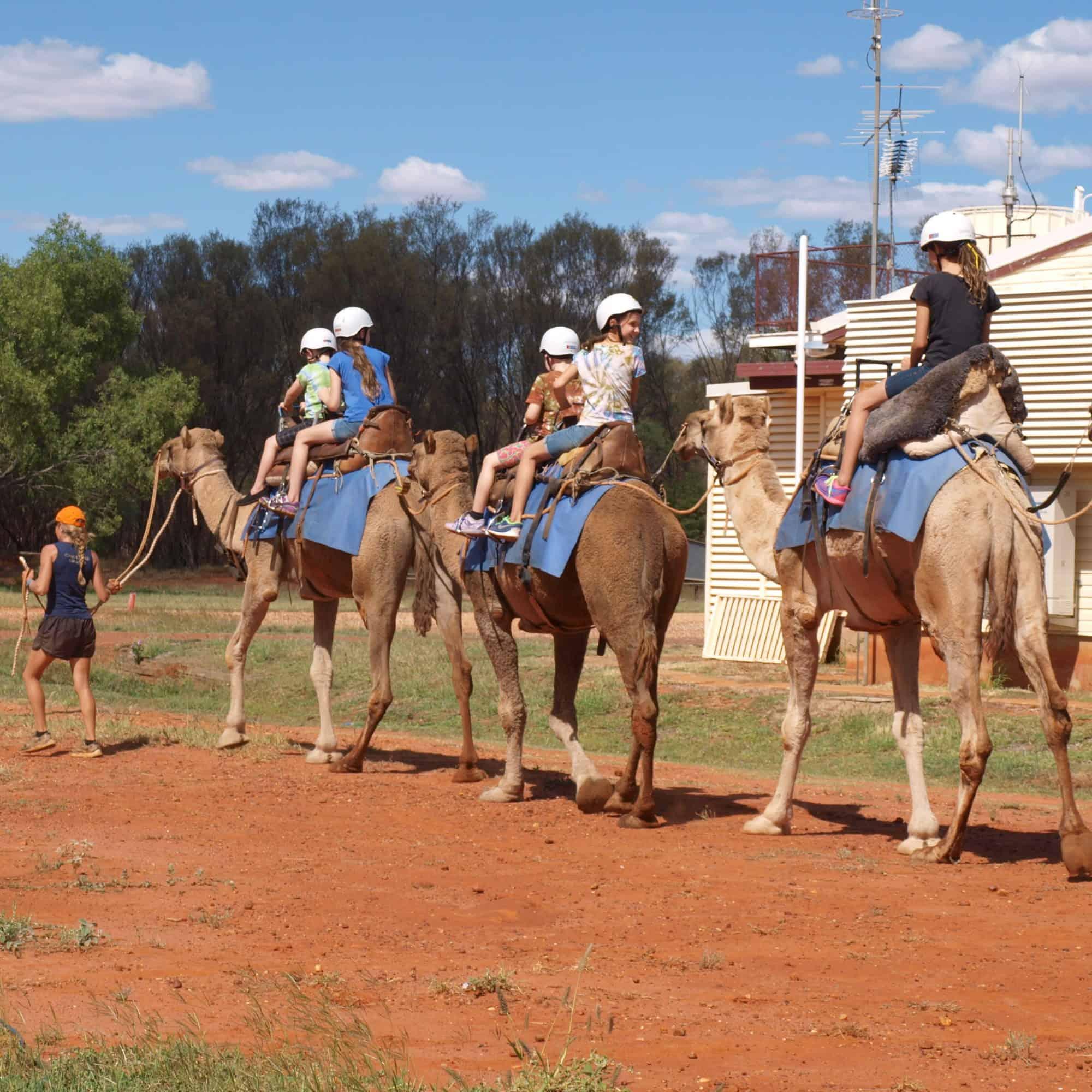 Camel rides in Charleville
